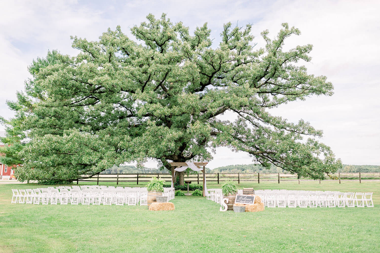 oak tree at sugarland barn