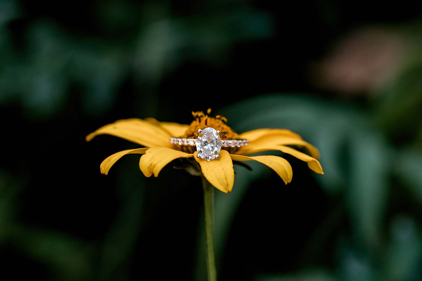Delia's Engagement Ring On Sunflower